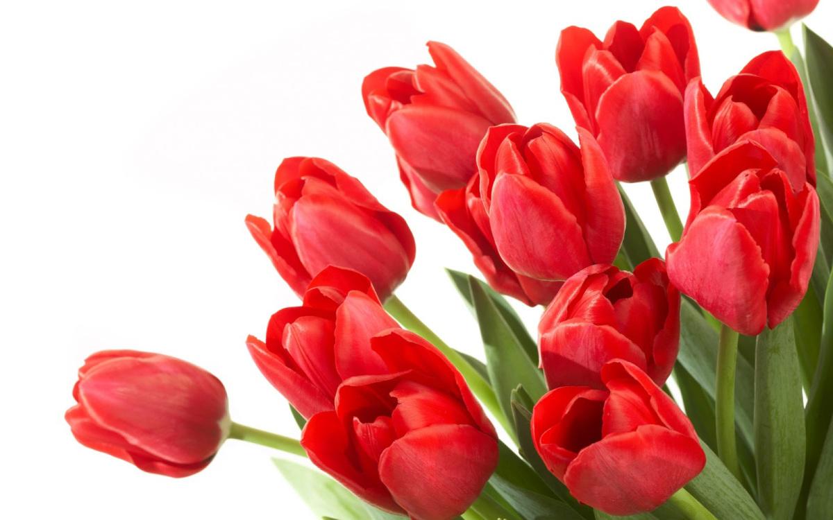 Открытки с 9 марта фото красивые